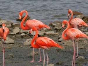 Bonaire dag 3 04042010 108